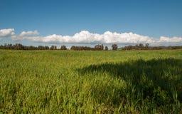 Cluudy-Himmel und grünes Feld Lizenzfreie Stockfotos