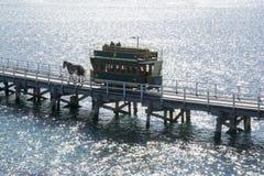 Clydesdale και συρμένο άλογο τραμ, λιμάνι του Victor, Νότια Αυστραλία Στοκ φωτογραφία με δικαίωμα ελεύθερης χρήσης