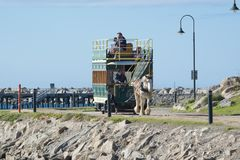 Clydesdale and Horse Drawn Tram, Granite Island, South Australia. Victor Harbor, South Australia: July 10, 2017 - The iconic clydesdale pulling the horse drawn stock photo