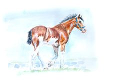 Clydesdale horse watercolor painting royalty free illustration
