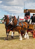 Clydesdale Horses Stock Photos