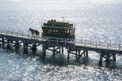 Clydesdale och häst dragen spårvagn, Victor Harbor, södra Australien Royaltyfri Foto