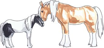 CLYDESDALE AND PONY Royalty Free Stock Photo