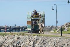 Clydesdale y tranvía traída por caballo, isla del granito, sur de Australia foto de archivo