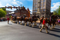 Clydesdales in Lancaster Stock Photography