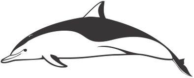 Clymene Dolphin. Vector image of clymene dolphin Royalty Free Stock Photo