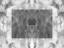 Clymnestera en blanco y negro Fotos de archivo