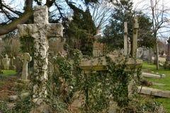 Cmentarniany grób przerastający bluszcz fotografia stock