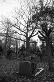cmentarz Obrazy Stock