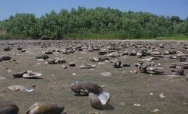 Cmentarz mussel Obraz Royalty Free