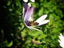Cmentarz pszczoły obraz royalty free