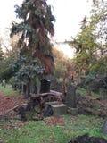 Cmentarz z spadać drzewem Obrazy Stock