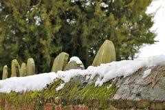Cmentarzy headstones w śniegu na ponurym zimy ` s dniu obraz stock