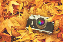 Câmera da foto do vintage nas folhas de bordo secas Fotos de Stock