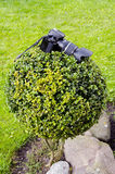Câmera dos fotógrafo na planta Fotografia de Stock