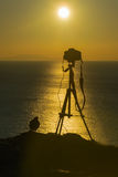 Câmera fotográfica e um pássaro contra um por do sol bonito Fotos de Stock