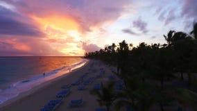 A câmera voa sobre as palmeiras ao longo da praia vídeos de arquivo