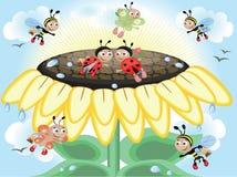 cmyk向日葵 免版税库存照片