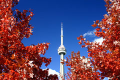 CN Tower and the Fall Colors Stock Images