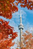 CN Tower with lovely red maple leaves. Looking up the CN Tower with lovely red maple leaves at Toronto, Canada royalty free stock photos