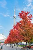 CN Tower with lovely red maple leaves. Looking up the CN Tower with lovely red maple leaves at Toronto, Canada stock images