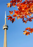 CN Tower and red maple leaves Stock Images