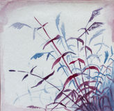 Cnae and grass. Cane and grass asian watercolor Stock Images