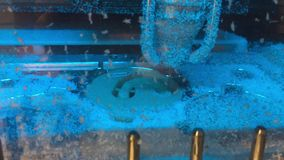 CNC chama krzywka polimeru mielenia maszyna dla stomatologicznych protetyk zdjęcie wideo