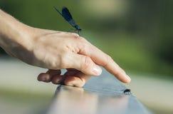 Coïncidence d'insectes d'été