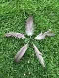 Coïncidence naturelle Image libre de droits