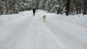 Собака бигля бежит в снеге Бигль идет в идя снег зиму Девушка имея потеху с ее собакой движение медленное сток-видео
