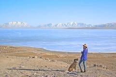 Собака на озере стоковая фотография rf