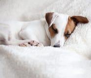 Собака спать на кровати стоковые фото