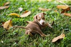 Собаки щенка младенца играя с сердитым стоковое фото