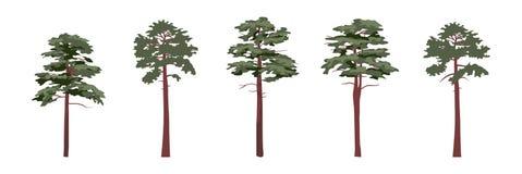 Собрание хвойных деревьев сосен иллюстрация вектора