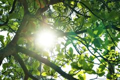 Солнечный луч прокалывая через листья стоковая фотография rf