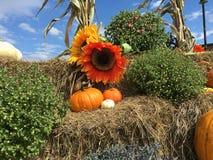 Солнцецветы и тыквы падения стоковое изображение rf