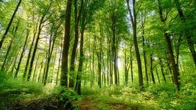 Солнце бросает свои красивые лучи в свежий зеленый лес, промежуток времени видеоматериал