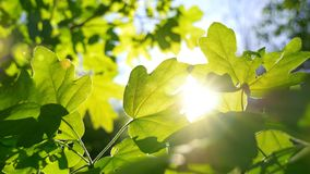 Солнце светя через двигать зеленую листву сток-видео