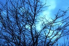 Солнце, облако, и обнаженный Treetop стоковые фото