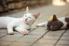 Сонная белая случайная половина глаз кота раскрыла, другое одно кладя на мостовую затем стоковое фото