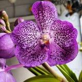 Сонный цветок стоковая фотография