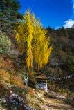 Сосна гималайского, chorten стойка около красочных сосен, Бутан стоковые фотографии rf