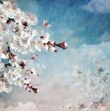Состав весны с зацветая цветками стоковые фото