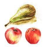Сочное зрелое зеленое конференция груши и яркие красные оптовые яблоки на белой предпосылке Установите нарисованной вручную аквар иллюстрация вектора