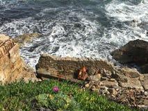 Coût de mer de Meditarrean au Gibraltar images libres de droits
