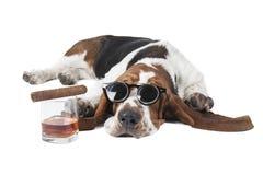 Cão (Basset com um vidro do uísque Imagens de Stock Royalty Free