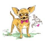 Cão bonito pequeno da chihuahua Fotos de Stock