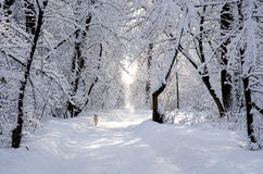 Cão branco na aléia nevado do parque do inverno Imagens de Stock