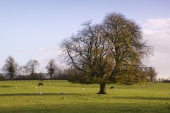 Co.Carlow Landscape. Landscape and tree in Co.Carlow, Ireland Royalty Free Stock Images